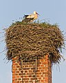 HVL 05-14 img 17 Ribbeck Storch.jpg
