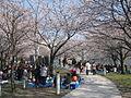 Hakusan Park Air garden sakura2.JPG