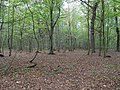 Hambach forest 65.jpg
