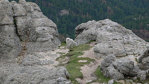Black Elk Peak - Image: Harney Peak mountain goat