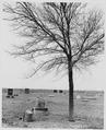 Haskell County, Kansas(^). Cemetery - NARA - 522141.tif