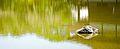 Heian Jingu 平安神宮 (KYOTO-JAPAN) (4950802983).jpg