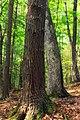 Hemlock Ridge Preserve (Revisited) (8) (15313818291).jpg