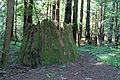 Hendry Woods State Park - Stierch 02.jpg