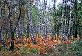 Herbst in der Wahner Heide 2.jpg