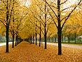 Herrenhäuser Allee in Hannover autumn 2013 01.JPG