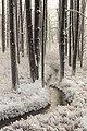 Hoar frost at Tangled Creek (9169e1c8-53e3-4bd2-b13a-9e69c1bcb045).jpg