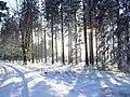 Hohes Venn im Winter (Dezember 2009) - panoramio - unixasket (1).jpg