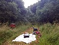 Home Wood, Bedfordshire (28642933823).jpg