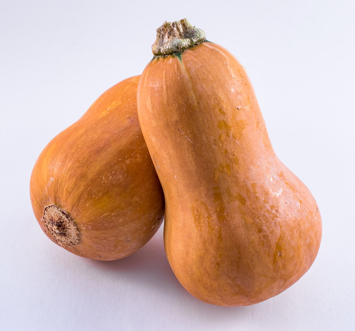 Honeynut Squash Wikipedia