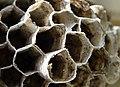 Hornet Nests.jpg