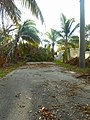Hurricane Irma - Miami - Miami City Cemetery 03.jpg