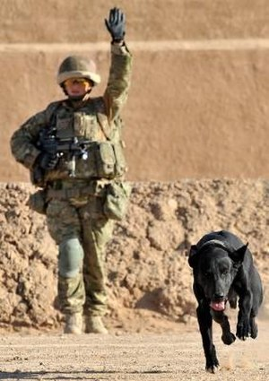 Counter-IED efforts - IED Detection (IE3D) Dog