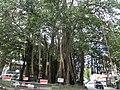 Ibbanwala, Colombo, Sri Lanka - panoramio (2).jpg