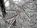 Ice Storm Kansas.jpg