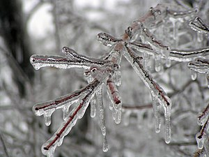 ice glaze on a tree in Kasas during the 2007 I...