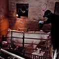 Igualdad Animal - Investigación Granjas Cerdos Toledo - 15-06-2010 - 26 (7138396025).jpg