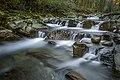 Il fiume Pescia.jpg