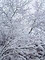 Il neige à Beaumont hiver 2005-2006 Paul M..JPG