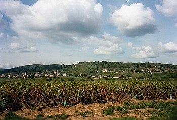 Img1412 Vignes Côte Chalonnaise.jpg