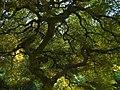 In Japanese garden, Portland (4333296416).jpg