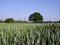 In the wheat - geograph.org.uk - 187731.jpg