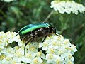 Insekti u parku 2.jpg