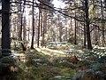 Inshoch Wood - geograph.org.uk - 251930.jpg