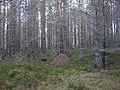 Inshriach Forest - geograph.org.uk - 319275.jpg