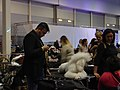 International Dog Show 2018 34.jpg
