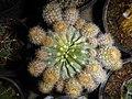 "Iran-qom-Cactus-The greenhouse of the thorn world گلخانه کاکتوس ""دنیای خار"" در روستای مبارک آباد قم- ایران 48.jpg"