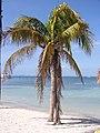 Isla Mujeres, August 2006 - panoramio.jpg