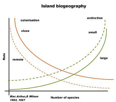 Verhältnis von Aussterberate zu Größe und Entfernung der besiedelten Insel vom Festland (Mac Arthur & Wilson)