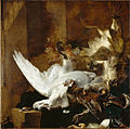 Jan Baptist Weenix - Still Life with a Dead Swan.jpg