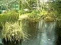 January Frost Botanic Garden Freiburg - Master Botany Photography 2014 - panoramio (19).jpg