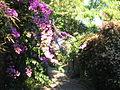 Jardín Aclimatación1.JPG