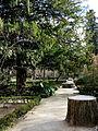 Jardín Botánico de Madrid en febrero (16672309301).jpg