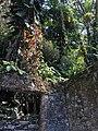 Jardín Escultórico Sir Edward James.jpg