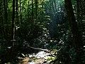 Joyce Kilmer Forest-27527-1L.jpg