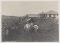 KITLV - 5401 - Kleingrothe, C.J. - Medan - Assistant's house in tobacco fields Deli - circa 1900.tif
