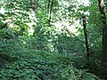 Kaniv Nature Reserve (May 2018) 06.jpg