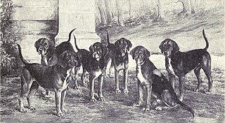 Kerry Beagle Dog breed