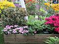 Keukenhof Garden (26).JPG