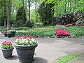 Keukenhof Garden (4).JPG