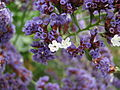 Kew Gardens - London - September 2008 (2954980797).jpg