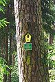 Kiefer Dresdner Heide (2).jpg