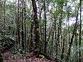 Kinabalu Park, Ranau, Sabah, Malaysia - panoramio (10).jpg