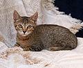 Kitten 6.jpg