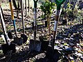 Kiyo Park 181110-029-nds (31089995747).jpg