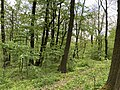 Kosmaj forest 1.jpg